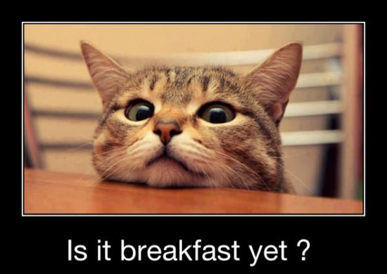 Image result for breakfast funny
